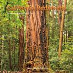 california redwoods calendar 2017 michael santa cruz