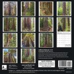 2019 Calendar California Redwoods