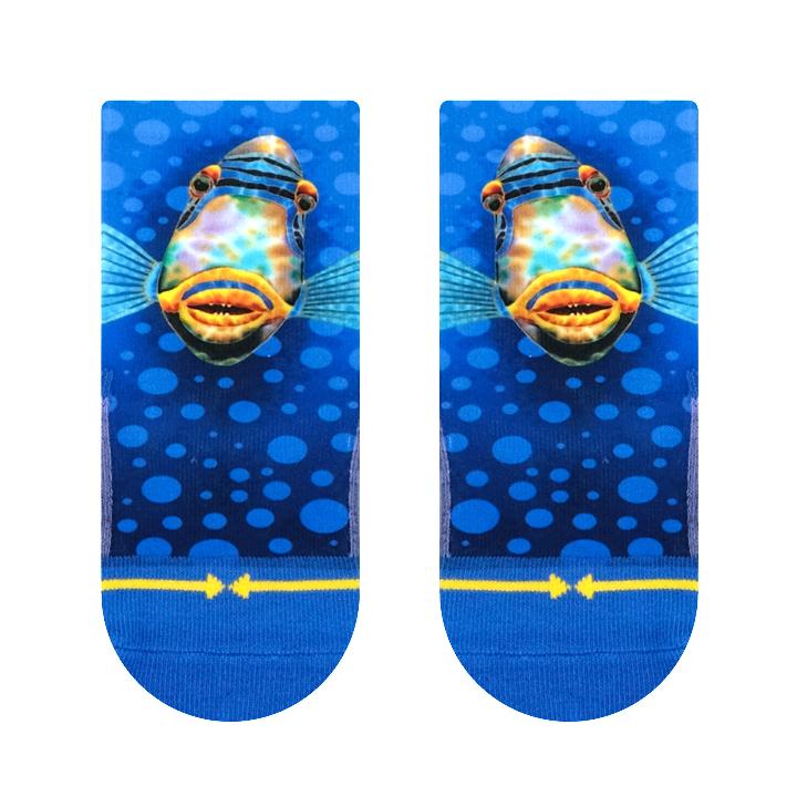 DanielRainbowFish