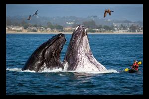 whales_postcard.JPG